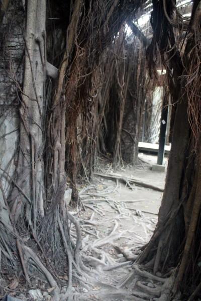 Anping Treehouse Corridor